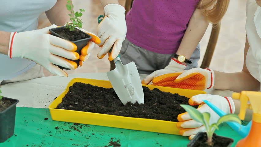 Gardeners replanting a little sprout and watering it