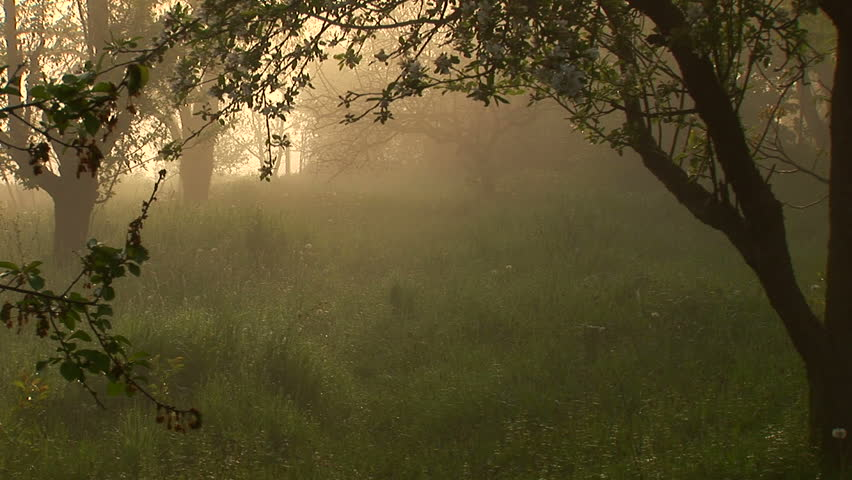 Misty morning in the backyard. Still and quiet! 