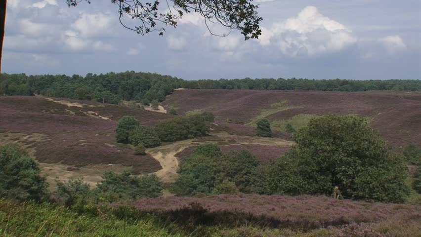 POSBANK, VELUWE NATIONAL PARK, THE NETHERLANDS - AUGUST 2012: hold + pan hillside. The Veluwe is the largest push moraine complex in the Netherlands. - HD stock video clip