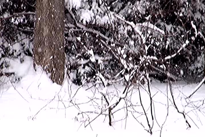 Winter Weather Snow Falling Blizzard Storm - Can be looped continuously - SD stock video clip