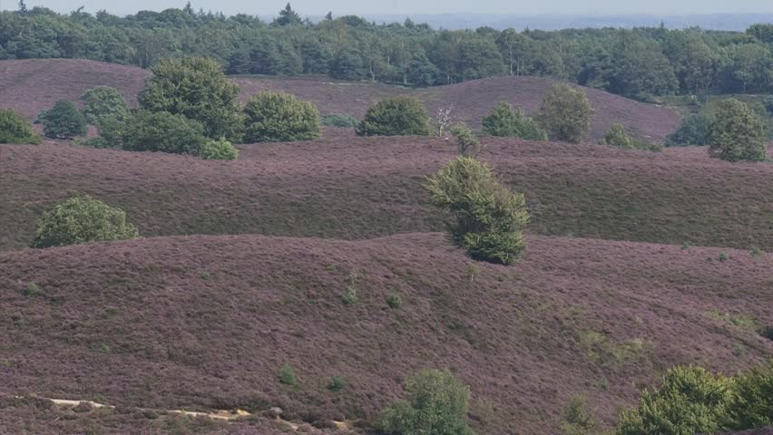 POSBANK, VELUWE NATIONAL PARK, THE NETHERLANDS - AUGUST 2012: view of moraine hills + zoom out. The Veluwe is the largest push moraine complex in the Netherlands. - HD stock footage clip