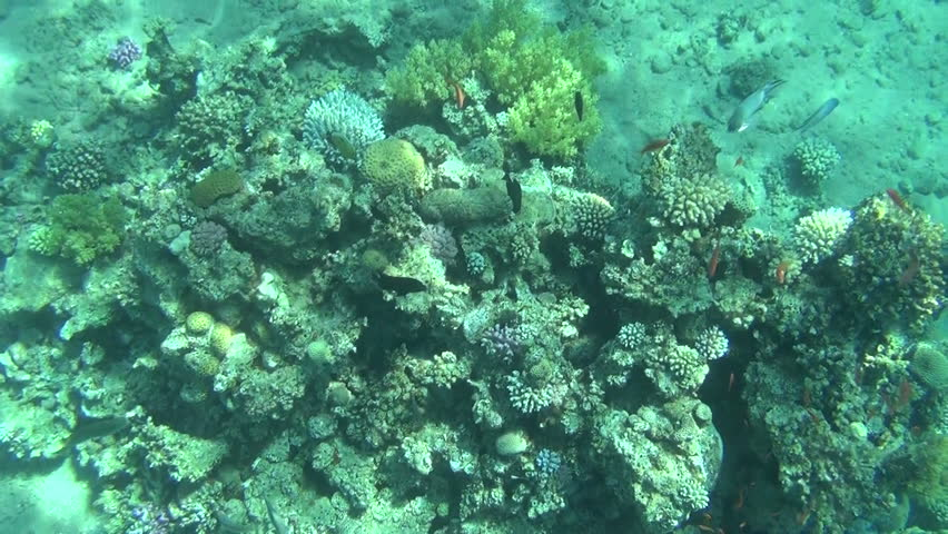 Colorful fishes on reef 05 | Shutterstock HD Video #3159235