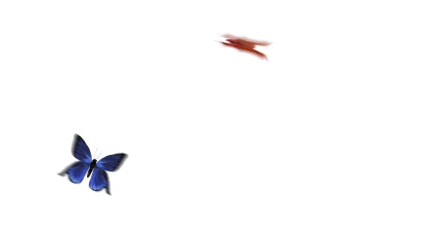 HD 1080p BG two beautiful butterflies flying and alpha channel  - HD stock footage clip