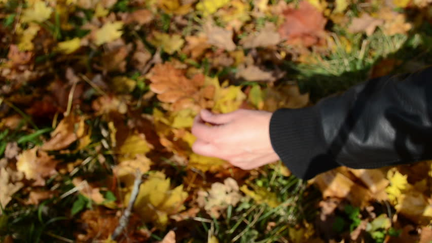 Hand pick autumn oak tree leaf fom ground and show it closer. | Shutterstock HD Video #3185164