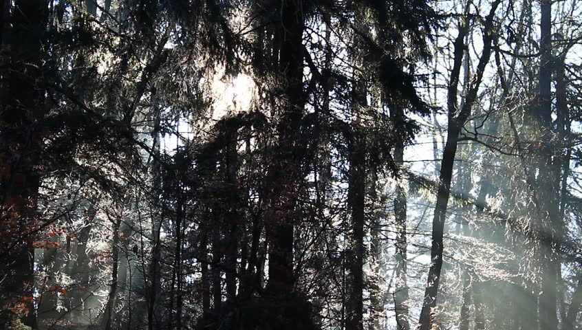 Sun beams in cold winter forest. - HD stock footage clip