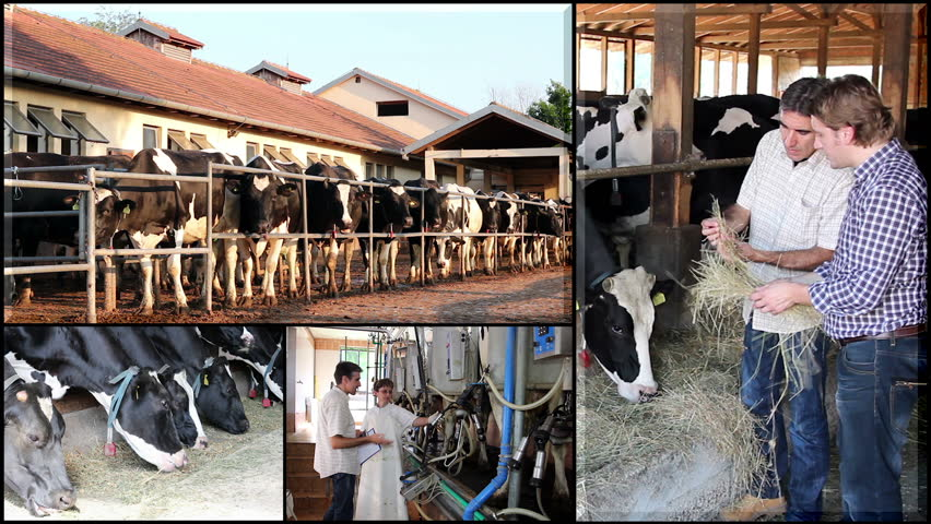 Dairy Farm. Farm Workers. Dairy Cows. Milking Equipment. Veterinarian at Work. Montage collection of images showing milk production and dairy farming. HD1080p.
