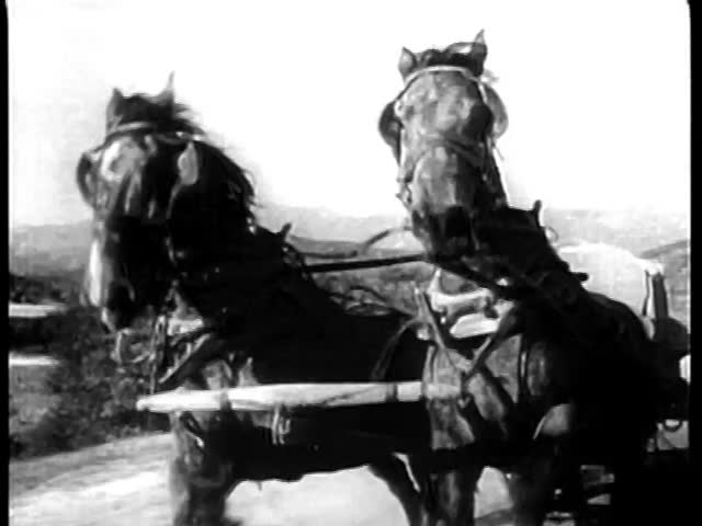 Galloping horses harnessed to an empty carriage on country road