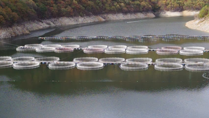 Fish farms in a mountain lake networks in rearing fish for Illinois fish farms