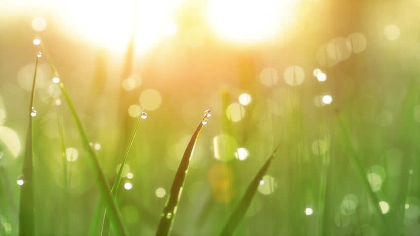 Blurred Grass Background With Water Drops. HD Shot With Motorized Slider.  - HD stock footage clip