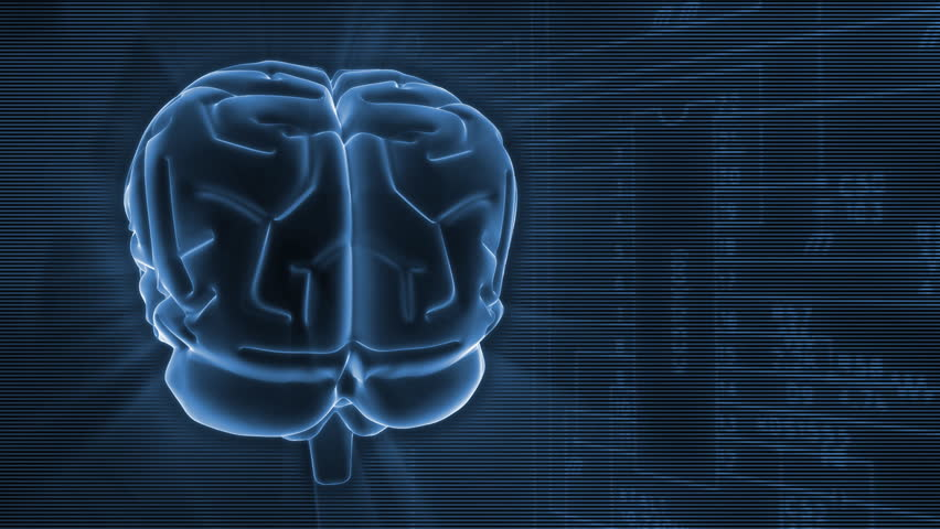 3D rotating brain on software processing background. Perfect loop.