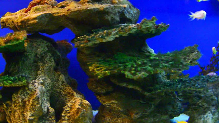 coral reef - HD stock footage clip