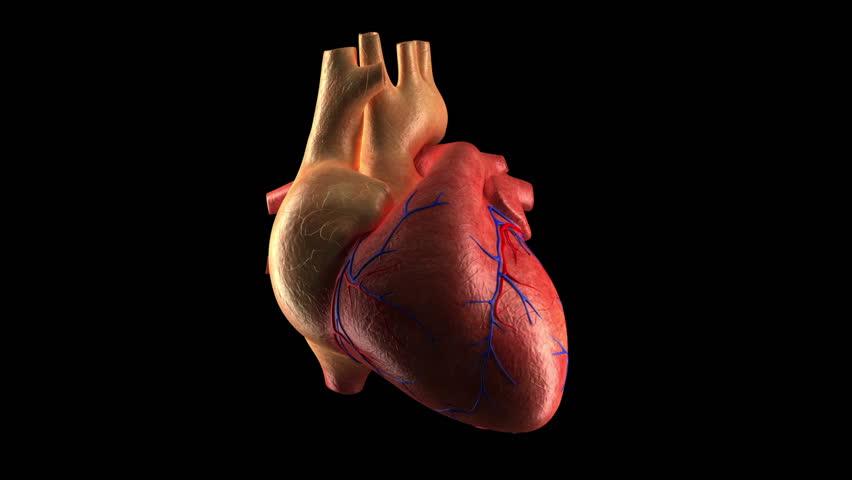 Human Heart Beat + ALPHA channel