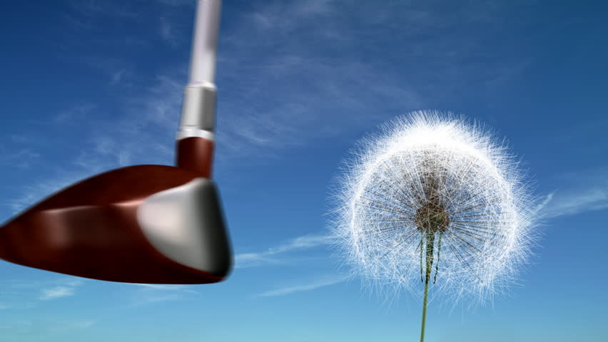 Golf club hits a dandelion.