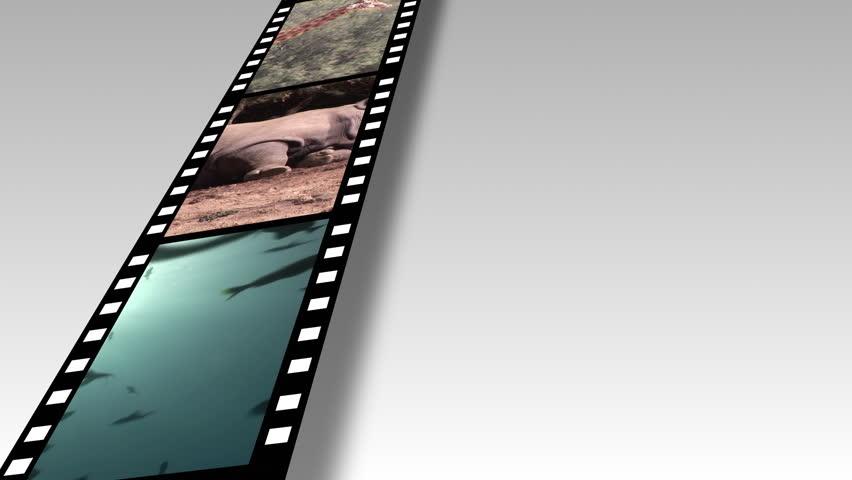 Animal film reel 3 - HD stock footage clip