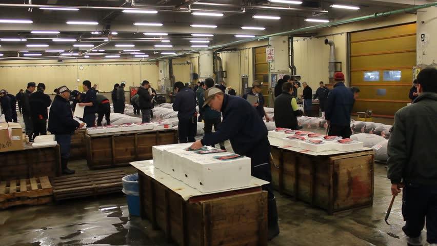 TOKYO - CIRCA MARCH 2013: People examine raw tuna at Tokyo's Tsukiji tuna auction. - HD stock video clip
