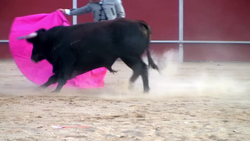 Spain bullfight, powerful black bull