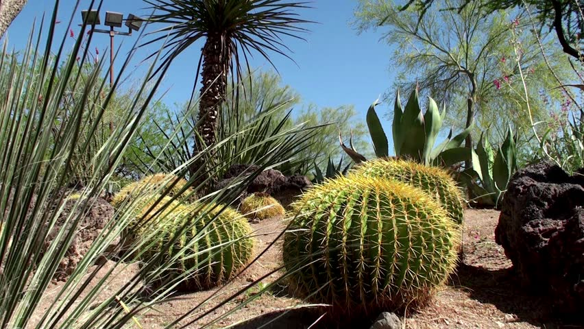 The Garden Of Cactus Succulent Plant Hd Stock Video Clip