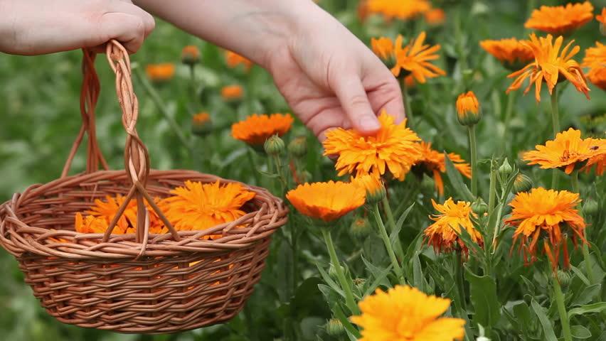 Picks+flowers footage | Stock clips & videos