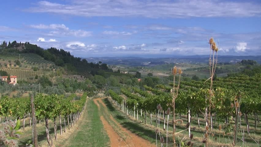 Vineyard in Tuscany, Italy - HD stock footage clip