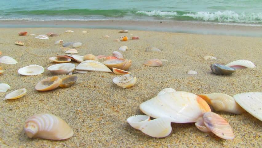 sea shells on the beach