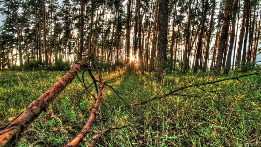 HDR Time Lapse In Pine Forest. Time Lapse With Moving Tree Shadows ...