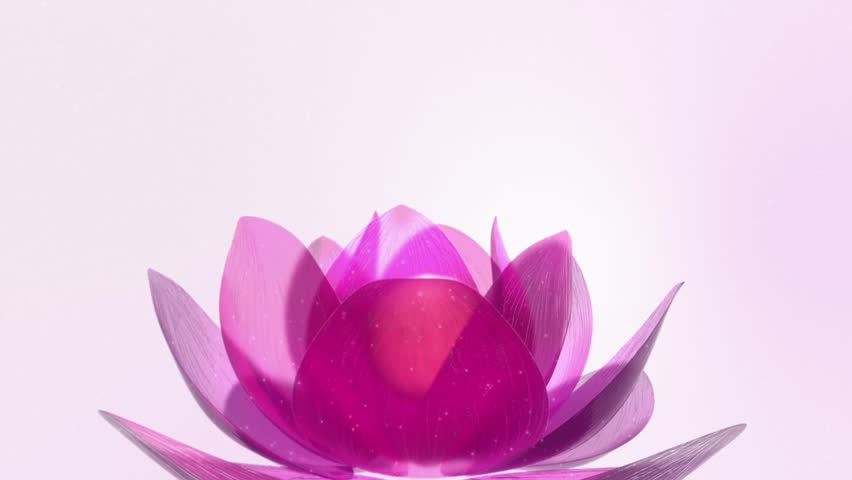 Beautiful Lotus Blossom. Lotus blossom rotating in shiny scenery.