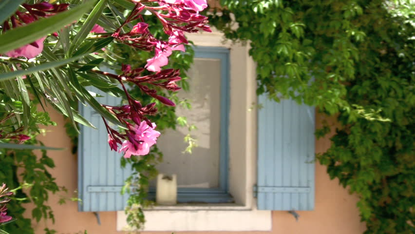 Red flowers in front of window with blue shutters - HD stock video clip