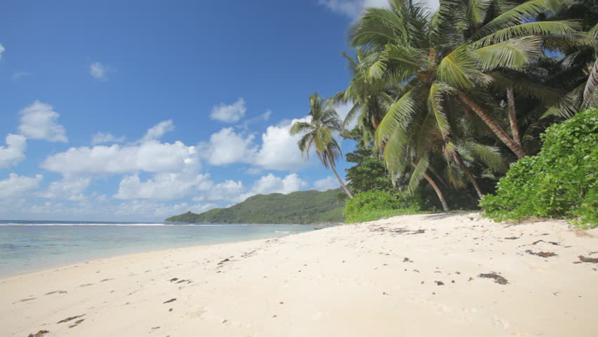 sandy beach with palm trees - HD stock footage clip
