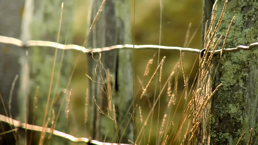 barb wire fence clip - photo #33