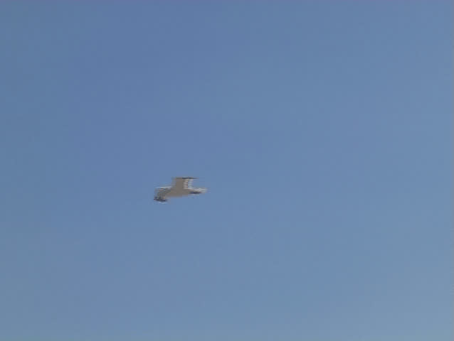 Seagull flying - SD stock video clip