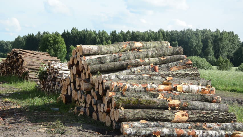 Birch Wood Logs ~ Sustainable organic wood fuel stacks and birch logs near