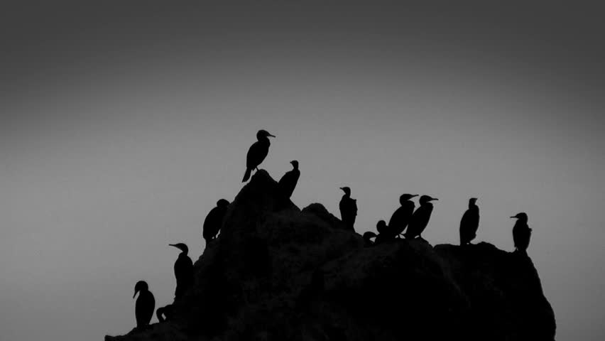 Sunset, cormorants sitting on big stone, sound, HD  - HD stock footage clip
