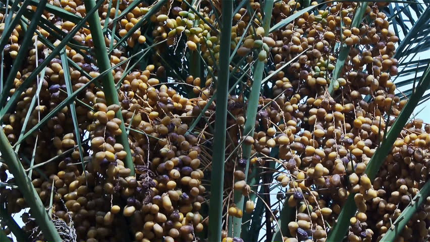 dates fruit norsk telesex