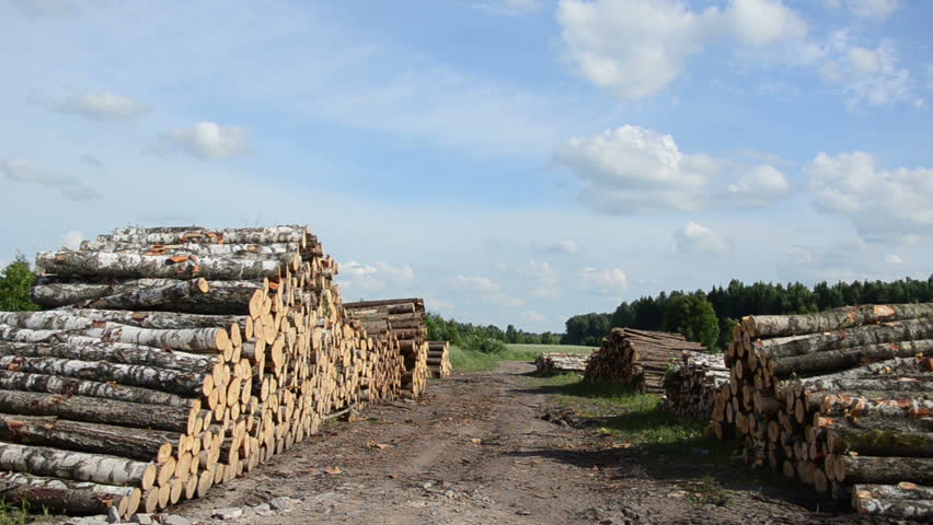 Panorama of wood fuel stacks and birch logs near forest and cloudy blue sky background.
