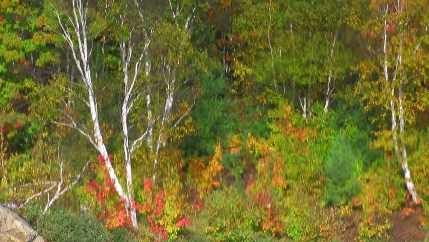 fall colors reflected off the water1920-1080 - HD stock video clip