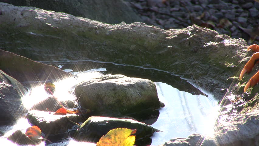 Rooster drinking water, water reflections | Shutterstock HD Video #577639