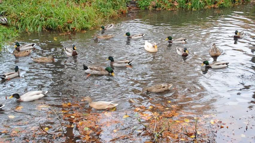 1920x1080 cabin lake ducks - photo #1