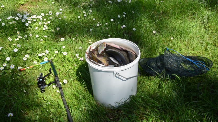 Between the daisies in the grass stands a big bucket full for Bucket of fish
