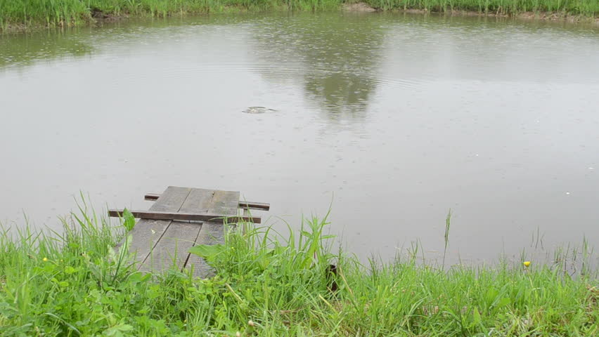 Small lake pond bridge and fish activity on water surface for Surface fish ponds
