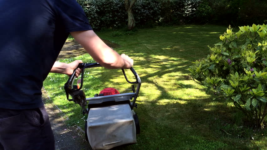 Mowing a green garden lawn covered in daisies with a rotary petrol powered mower.