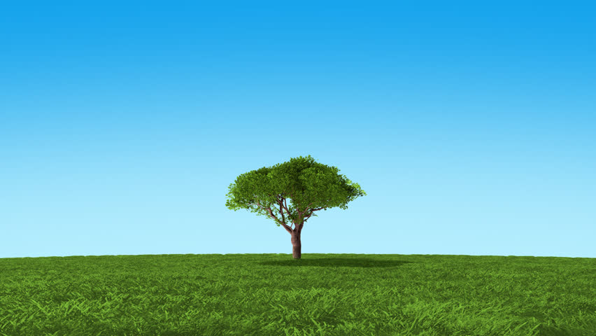 Growing up tree animation - HD stock footage clip