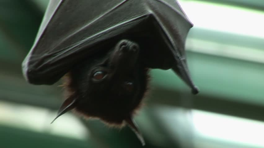 how to close up from bats