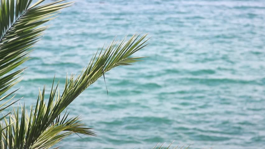 A tranquil scene of a sea and a palm tree at the front/Love the sound of the ocean - HD stock video clip