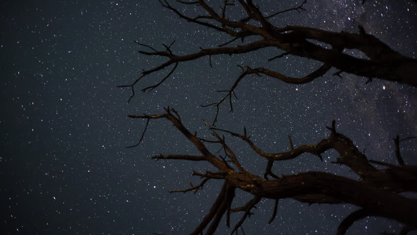 Linear, pan and tilt timelapse shot from a low angle shooting up towards a dead acacia tree, silhouetted against the african night sky with the Milky Way moving into the shot.