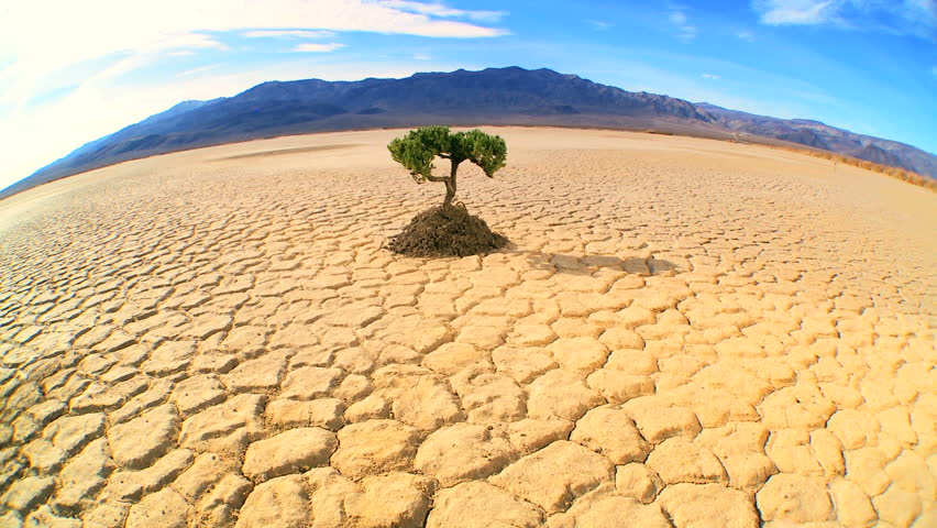 Concept climate change shot of green tree growing in barren desert landscape in wide-angle - HD stock footage clip