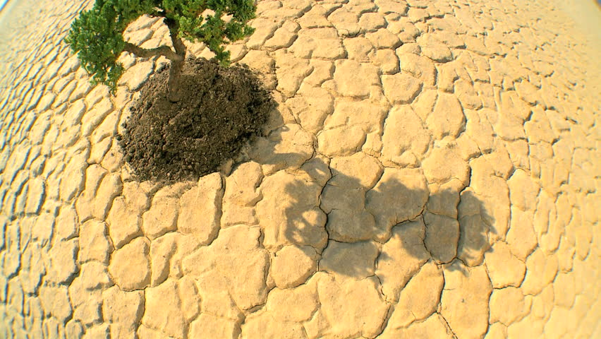 Overhead concept climate change shot of green tree growing in barren desert landscape in wide-angle - HD stock video clip