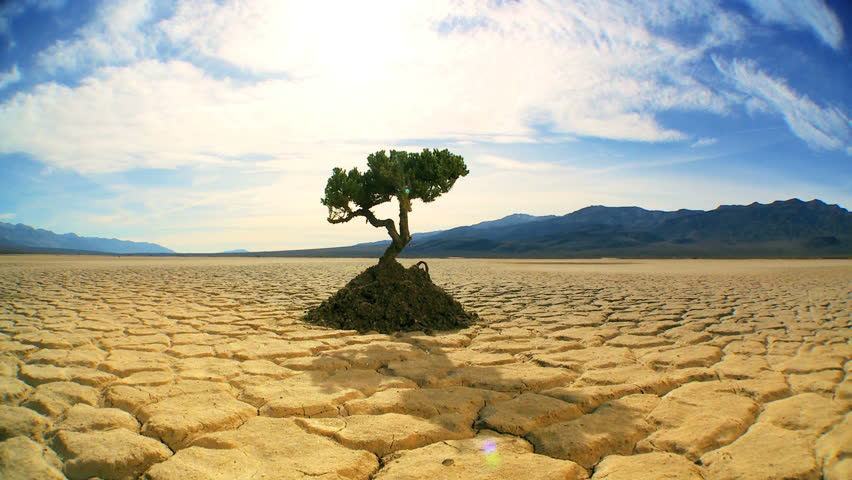 Time-lapse concept climate change shot of green tree growing in arid desert landscape with hills behind - HD stock footage clip