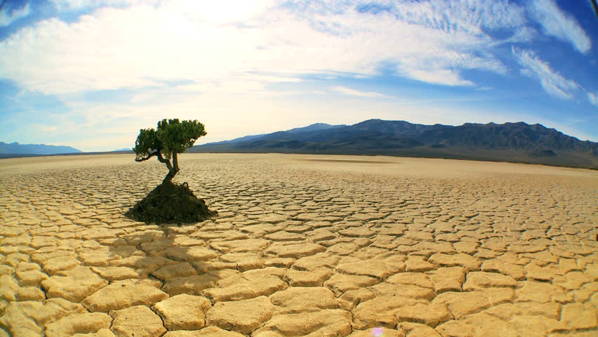 Concept climate change shot of green tree growing in arid desert landscape with hills behind - HD stock video clip