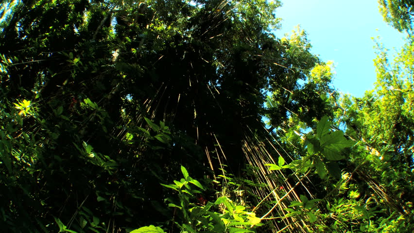 Sunlight filtering through lush tall rainforest with audio | Shutterstock HD Video #675397