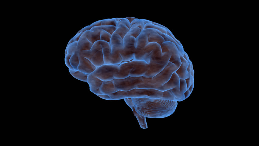 Animated human brain - photo#47